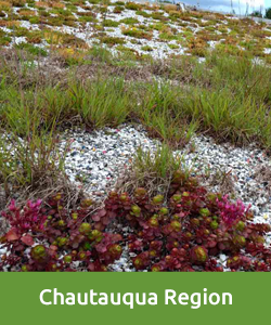 Chautauqua region, Green Top, Commercial project, Green Roof, plugs